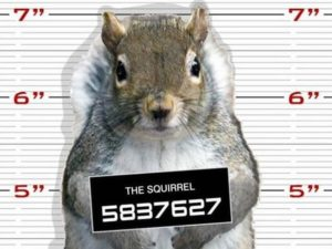 Wanted! Chief Squirrels, Dani & Tami Lemberger